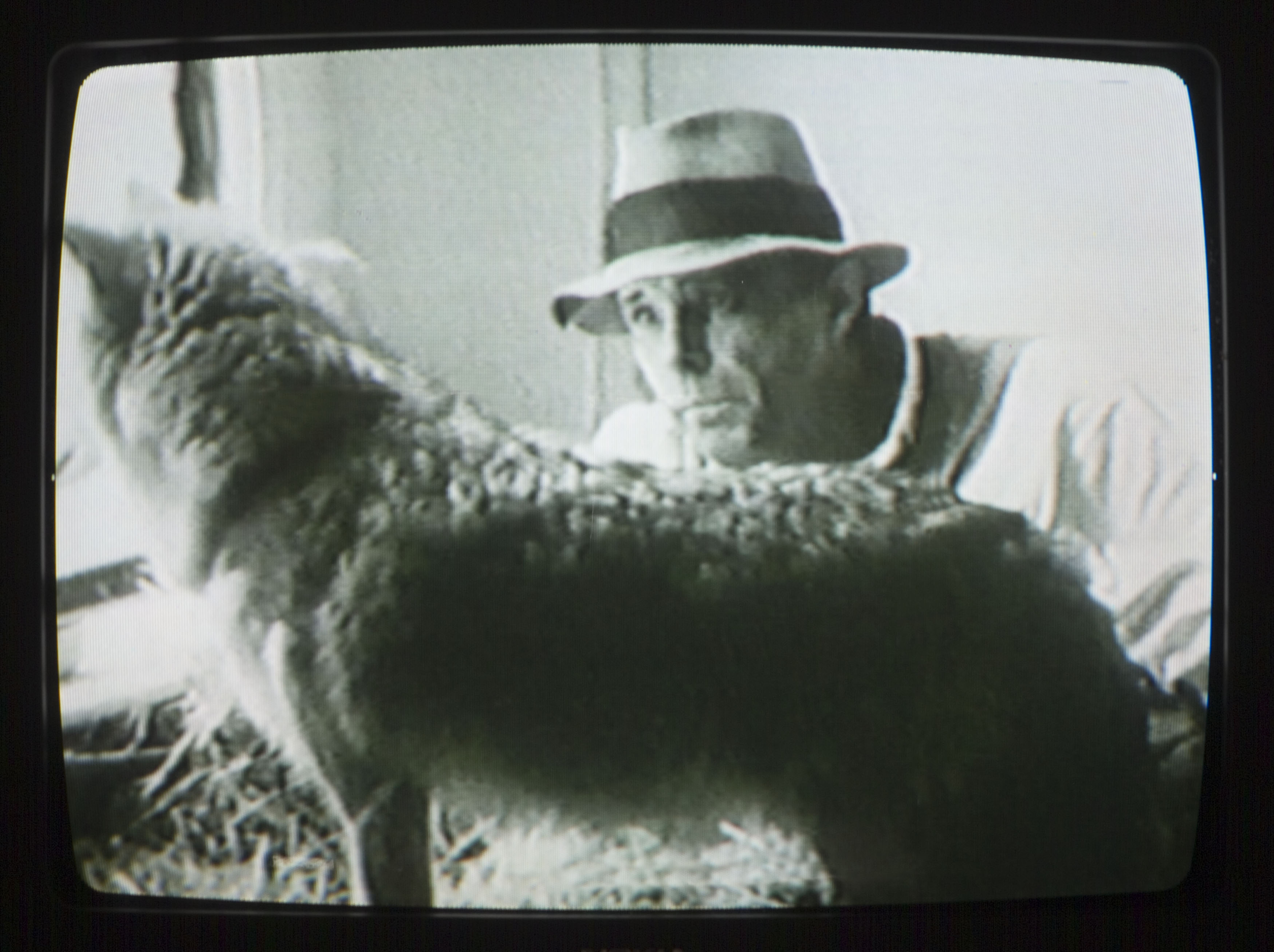 Joseph Beuys Coyote