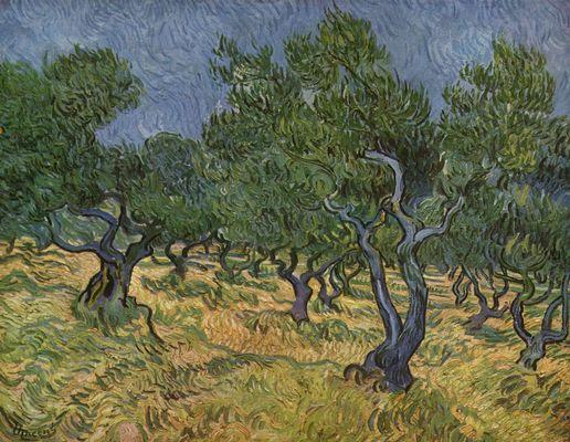 Vincent van Gogh Olijfgaard